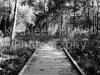 bw_footbridge_8x10-2