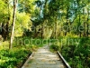 wood_bridge-2